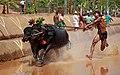 Pilikula Kambala, Mangalore.jpg