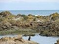 Pinguin at Island Bay, Wellington (3).JPG