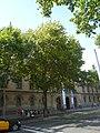 Plàtan de la plaça Universitat P1510826.jpg