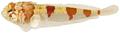 Platygillellus rubrocinctus - pone.0010676.g142.png