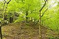 Plymbridge Woods near Cann Viaduct (3509).jpg