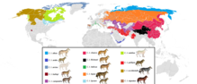 Description de l'image Present distribution of gray wolf (canis lupus) subspecies.png.