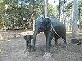 Prikaz slonova u Kambodži.jpg