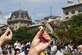 Principala atractie la Notre - Dame Paris.jpg