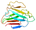 Protein LMNA PDB 1ifr.png