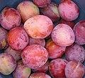 Prunus domestica 'Reine Victoria'.jpg