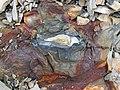 Pyrite atop chert nodule (Delaware Limestone, Middle Devonian; Emerald Parkway roadcut, Dublin, Ohio, USA) 1 (27317902147).jpg