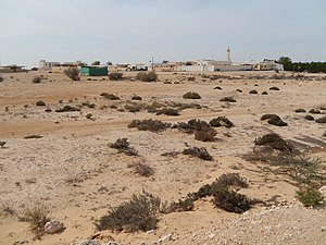 Flora of Qatar - View of Al Jumailiyah village and desert scrub
