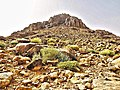 Qesm Saint Katrin, South Sinai Governorate, Egypt - panoramio (17).jpg
