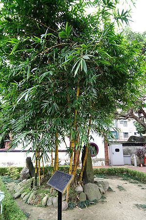 Lin Family Mansion and Garden - Qixianlin (七絃林)