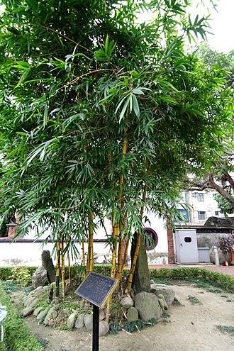 Lin Family Mansion and Garden - Qixianlin (七絃林)