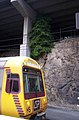 Queensland Rail SMU220 and Ficus benjamina lithophyte, Platform 6, Central Station Brisbane 100 1708.jpg