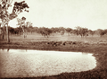 Queensland State Archives 2308 Lagoon and grazing land at Jimbour Station Darling Downs 1897.png