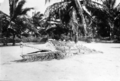 Queensland State Archives 5764 Ceremonial crocodile Yorke Island Torres Shire June 1931.png