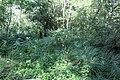 Réserve naturelle Marais Lavours Aignoz Ceyzérieu 43.jpg