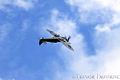 RAF BBMF Spitfire (9707760099).jpg