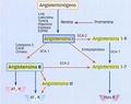 RAS y derivados de la angiotensina I.png