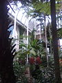 RBGE Palm House interior 01.jpg