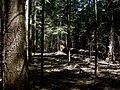 REZERWAT PRZYRODY Olbina 06 - panoramio.jpg