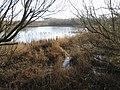 Raith Haugh Nature Reserve - geograph.org.uk - 341623.jpg