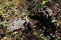 Raleigh Cemetery Memphis TN 2013-11-10 005.jpg