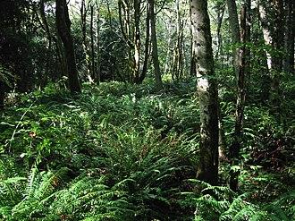 Alnus rubra - Red alder, western hemlock and bigleaf maple forest
