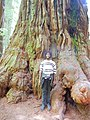 Redwood National Forest Tree.jpg