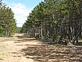 Ridge Bridle Path Vistas Ispagnac Col de Montmirat 6330.JPG