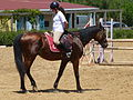 Riding a Horse Backwards 1110801.jpg