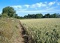 Ripening wheat, Low Field - geograph.org.uk - 488357.jpg