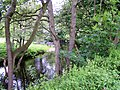 River Nidd - geograph.org.uk - 1351624.jpg
