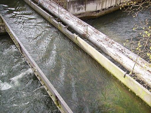 Zirbelnuss-Kanal-Brücke in Augsburg