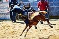 Rodeo de Paita Nouvelle Caledonie.jpg
