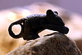 Roman bronze mouse IMG 4370.JPG