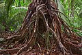 Roots (17544889764).jpg