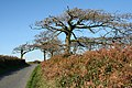 Rose Ash, Quince Cross - geograph.org.uk - 272383.jpg
