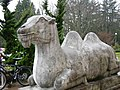 SAAM Camel.jpg