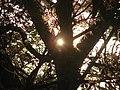 SHINE SUN.jpg