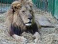 Safari park - panoramio.jpg