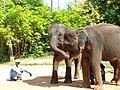 "Samui 2013 May ""Island Safari"" - panoramio (4).jpg"