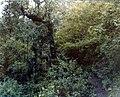 Santa Isabel Chimaltenango Junio 1979 04.jpg