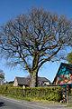 Schleswig-Holstein, Tornesch, Naturdenkmal 12-07 NIK 2287.JPG