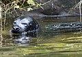 Seal Image 4.jpg