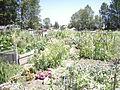 Seattle - Marra Farm 04.jpg
