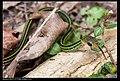 Serpentes (6085489154).jpg