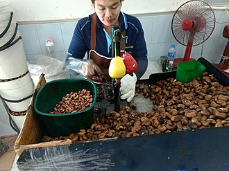 Cashew - A woman uses a machine to shell cashews in Phuket, Thailand.