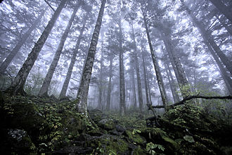 Shennongjia - Virgin forest at approx 2500m above sea level