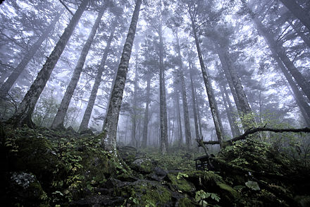 Transferring land rights to indigenous inhabitants is argued to efficiently conserve forests. Shennongjia virgin forest.jpg