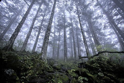 Shennongjia virgin forest