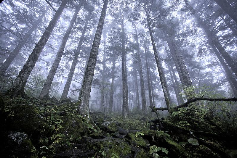 Shennongjia virgin forest.jpg